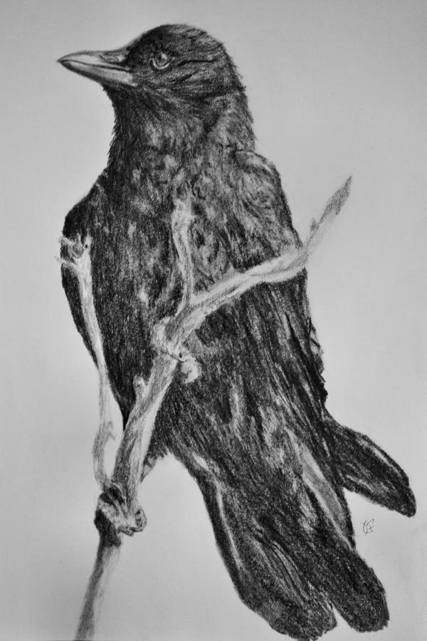 Crow by panicKELS