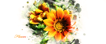 Flowers and Sunshine by wmw71190