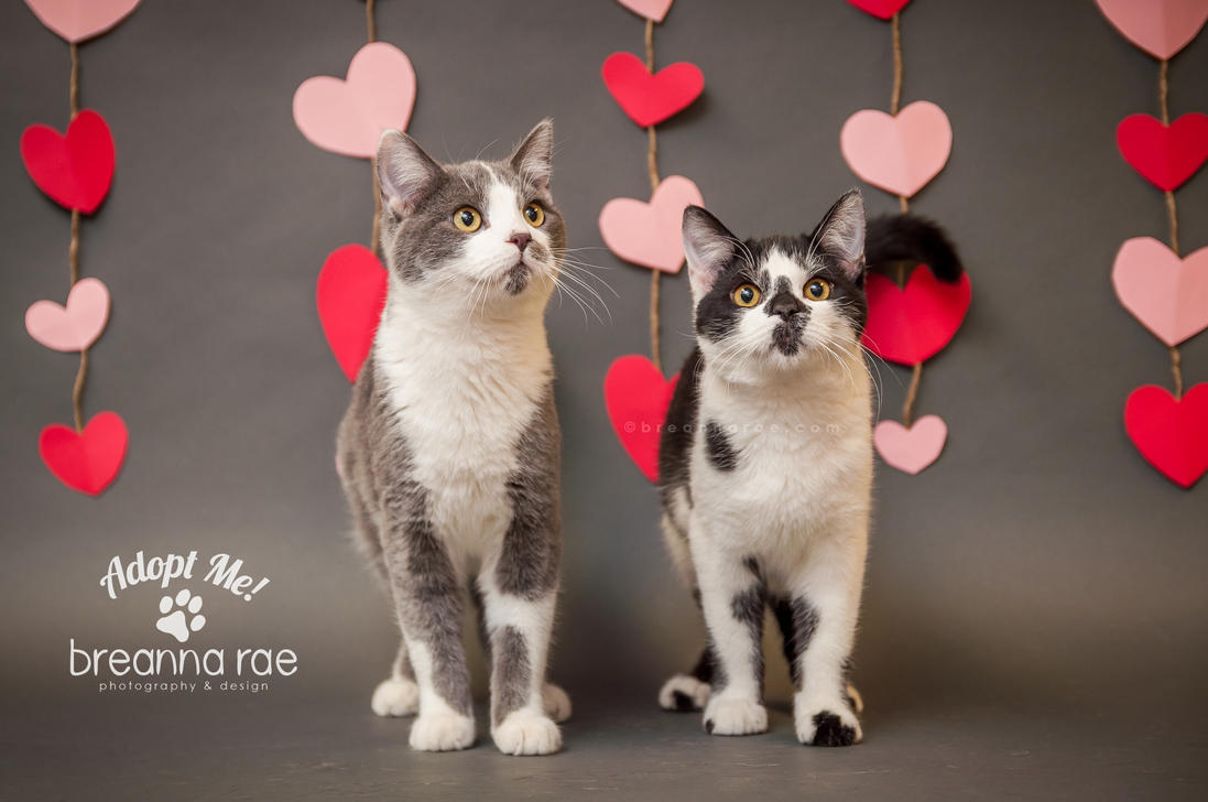 Adopt Me {Smokey and Marley} Cats by breanna-rae