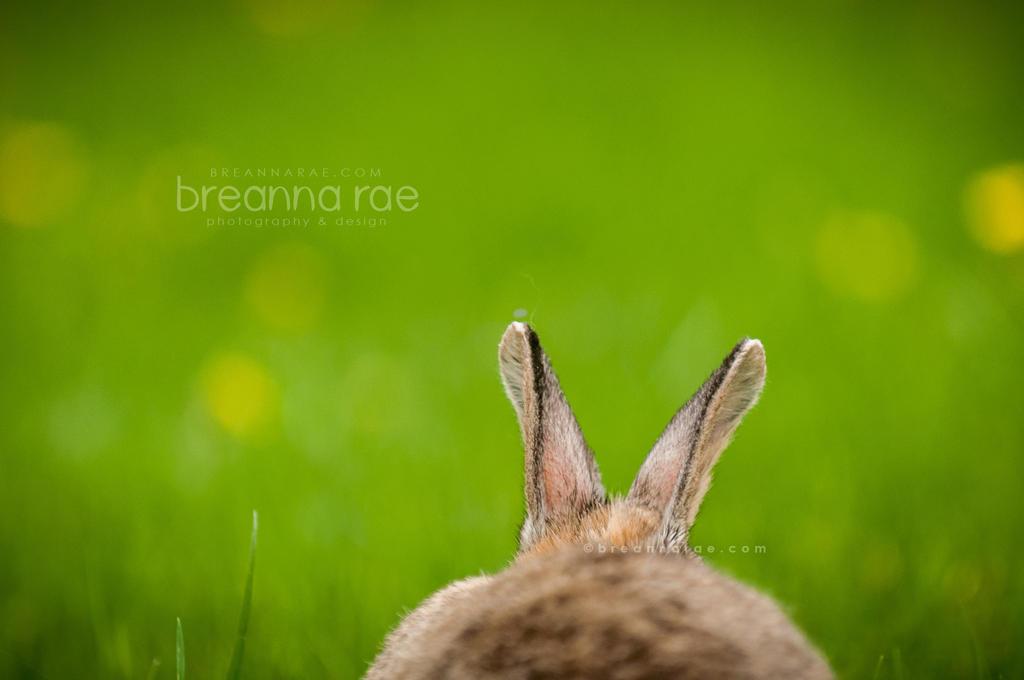 Louie's Ears by breanna-rae
