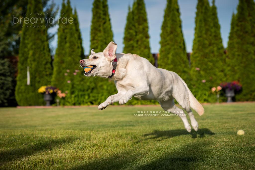 Sunnie High Flyin' by breanna-rae