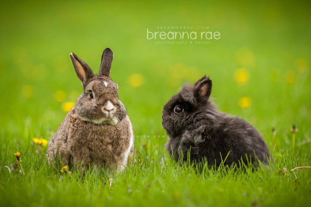 Louie and Lynzi by breanna-rae