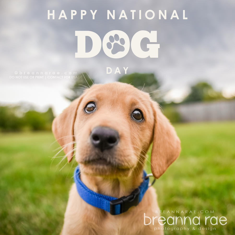 Happy National Dog Day! by breanna-rae