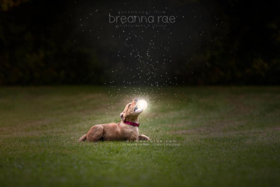 Little Dreamcatcher by breanna-rae