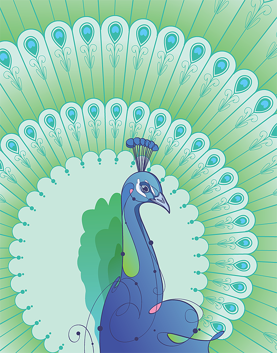Peacock by rubenslp