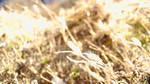 Grain in Light by ShadWolf90
