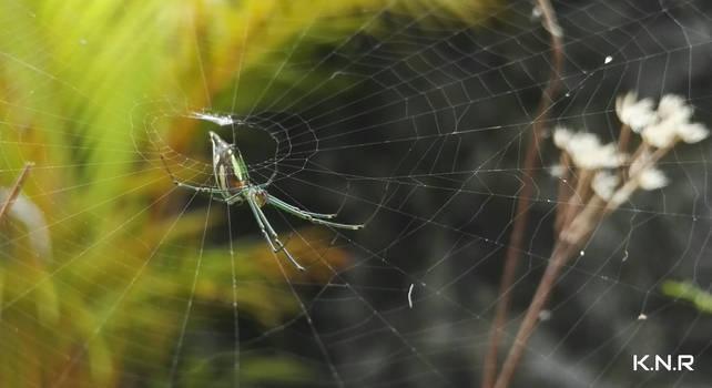 I love spiders by KuroNoRoman