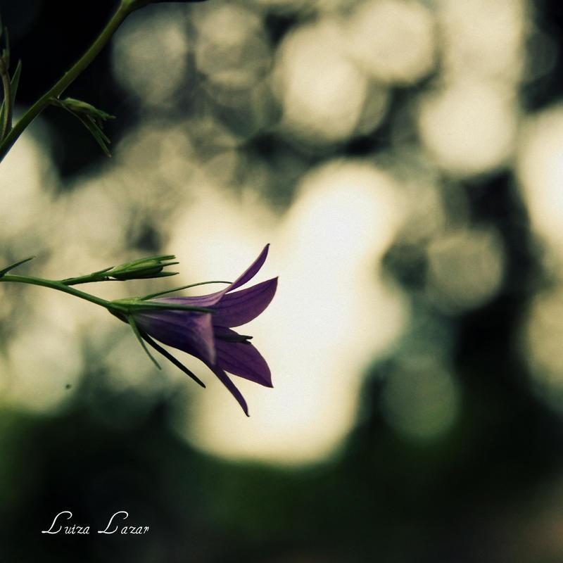 moonlight sonata by LuizaLazar