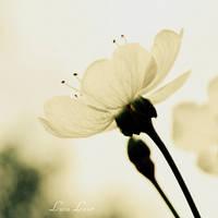 distant dreamer by LuizaLazar