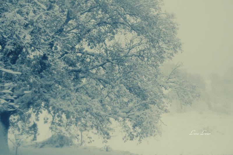 frozen by LuizaLazar