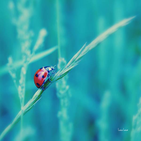 Ladybug by LuizaLazar