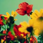 in my field of paper flowers