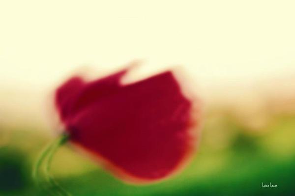 Le vent nous portera by LuizaLazar