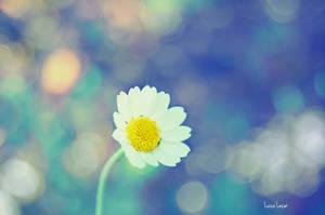 Morning daisy by LuizaLazar