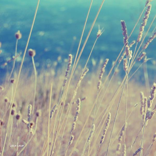 Summer meadows by LuizaLazar