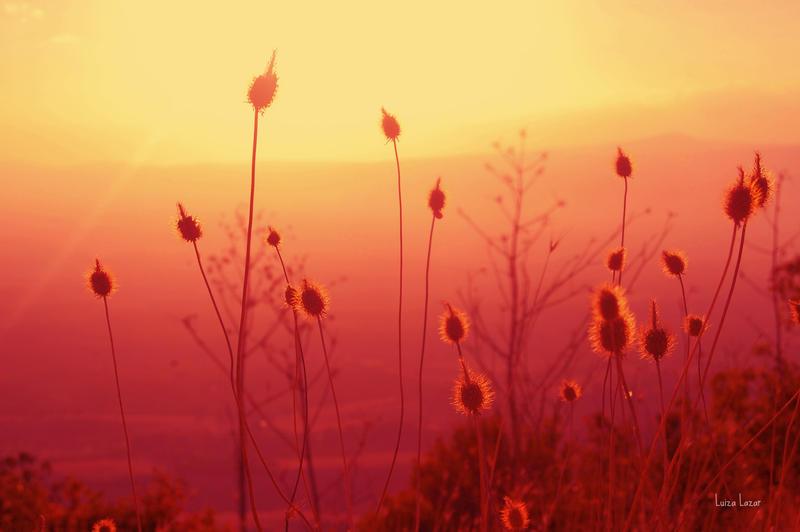 Red sunset by LuizaLazar