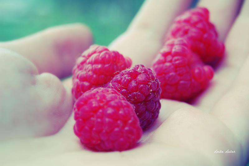 Picking raspberries by LuizaLazar