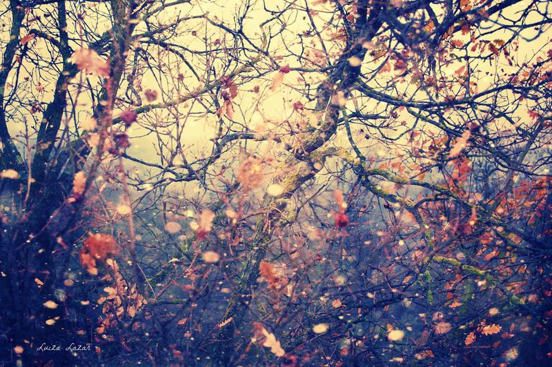 ethereal autumn by LuizaLazar