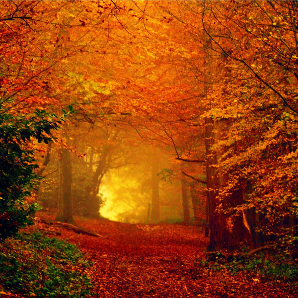 Fall Pics Wallpaper: When Autumn Leaves Start To Fall By LuizaLazar On DeviantArt