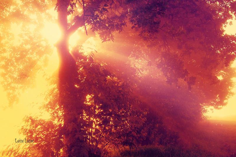 AutumnSong by LuizaLazar