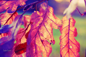Golden Leaves by LuizaLazar