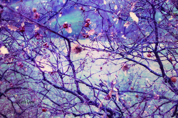 Above by LuizaLazar