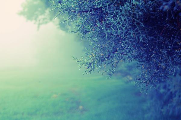 cold days by LuizaLazar
