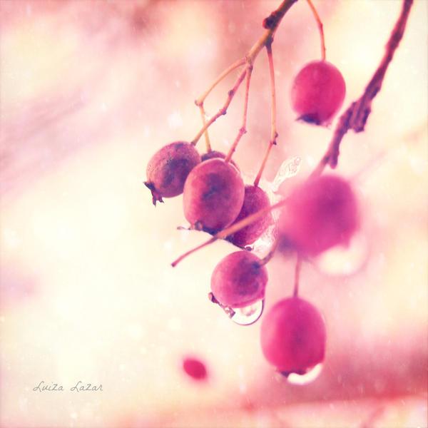 my november by LuizaLazar