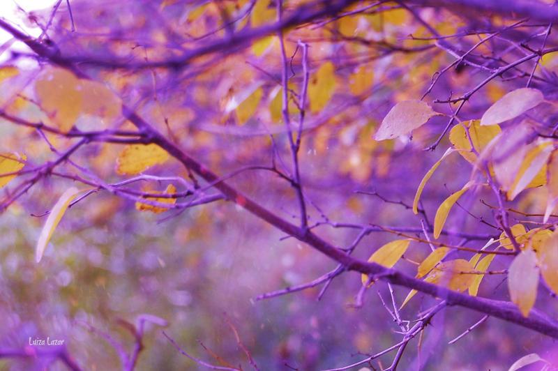 november dreams II by LuizaLazar