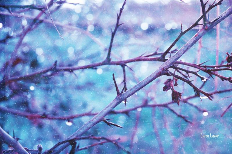 A frozen world by LuizaLazar