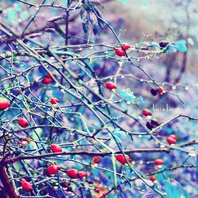I'm blue by LuizaLazar