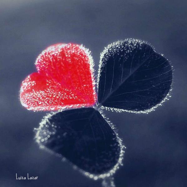 Lucky Love.