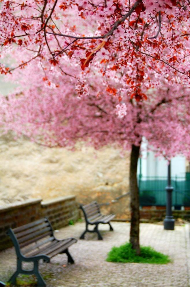 Pink by LuizaLazar