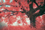 the tale of the Red Tree