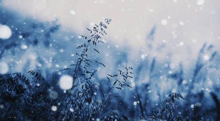 turning blue by LuizaLazar