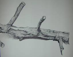 Branch Study