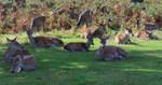 Red deer herd by ak1508