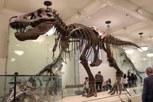 Tyrannosaurus (AMNH5027)