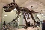 Tyrannosaurus (AMNH5027) by ak1508