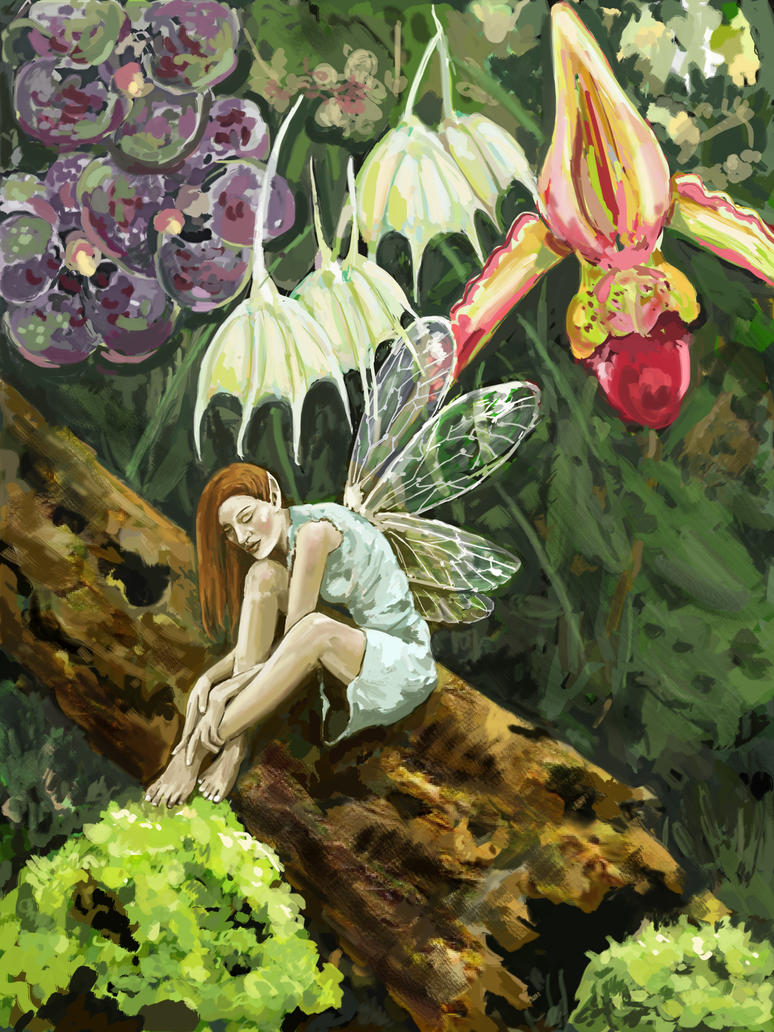 Orchid Fairy by mreach