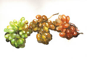 Colourful grapes by ayjaja