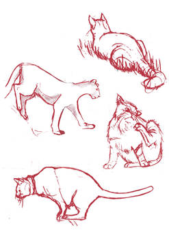 Feline References