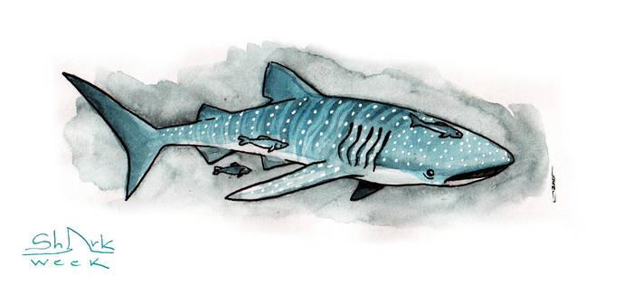 Sharkweek #01