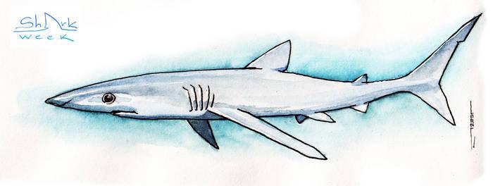 Sharkweek #02