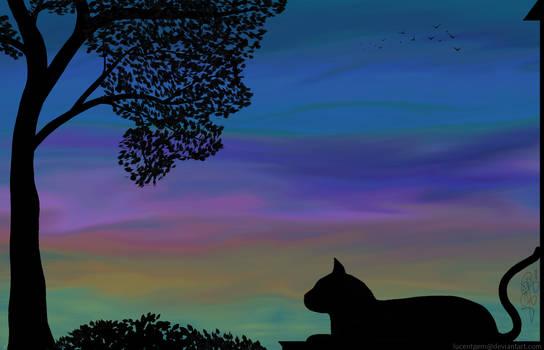 Sunset Kitty