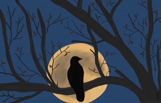 Moonlight Bird of Prey