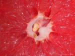 Grapefruit by creativemikey