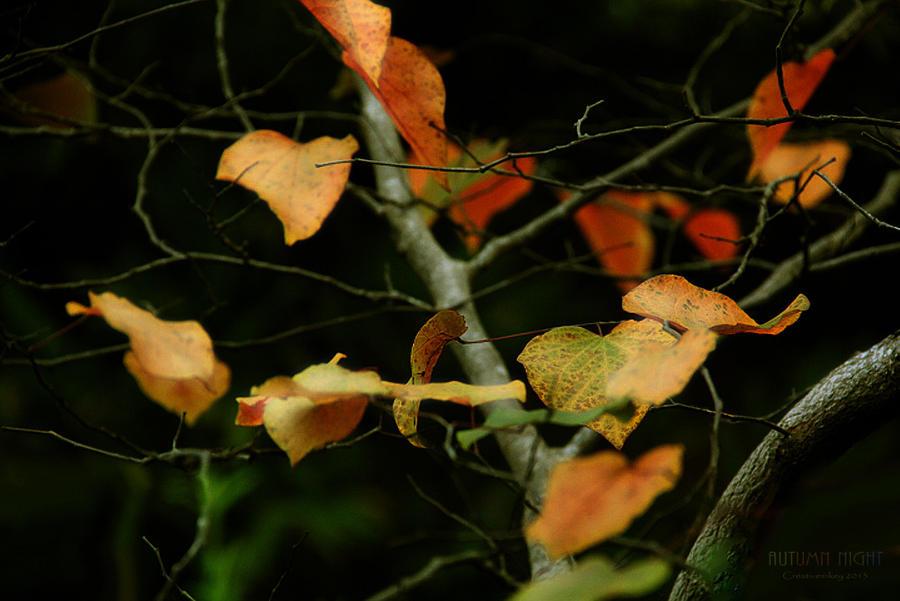 Autumn Night by creativemikey