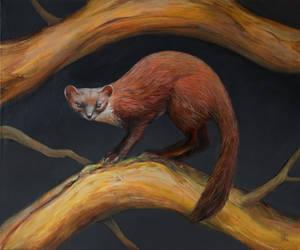Pine Marten by Ivan-Kovalevskiy