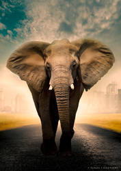 9.nathalie Callenaere Photomontage Elephant by BOULPIX